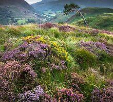 Snowdonia - Heather & Gorse above Beddgelert by Angie Latham