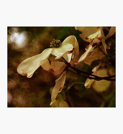 A Spring Beauty Fotodruck