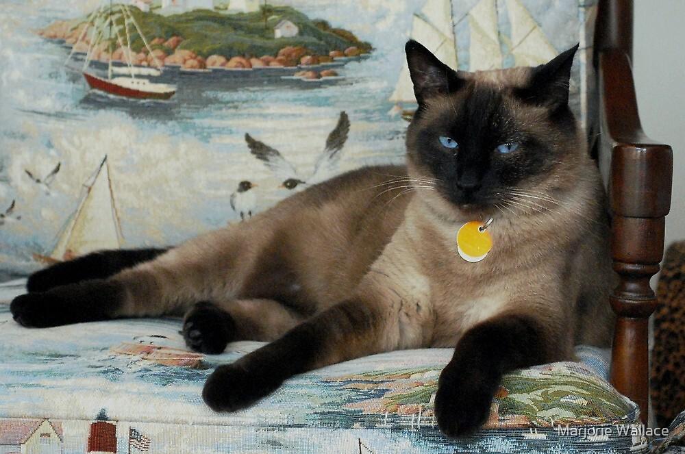Blue-eyed Bella by Marjorie Wallace