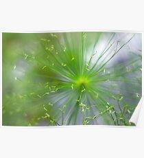 Spikelets of Flowers Poster