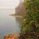 Coastline in Fog, Blue Hill Peninsula, Maine by fauselr
