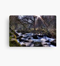 Enchanting Canvas Print