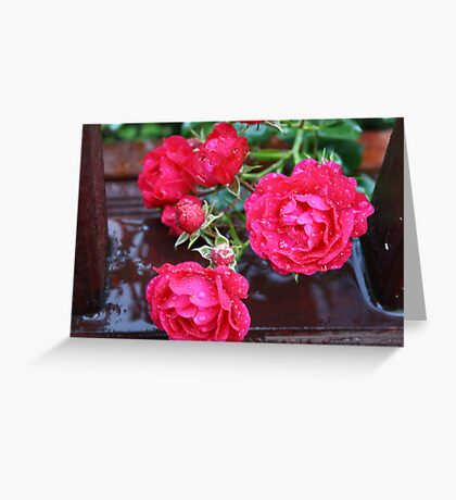 A GROUP OF ROSE'S  Greeting Card