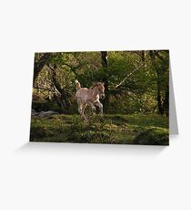 Highland Foal Greeting Card