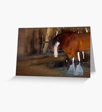 Bad Hair Day - Draught Horse Greeting Card