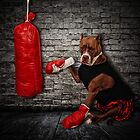 The Boxer by Lover1969
