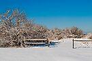 Winter scene by Yelena Rozov