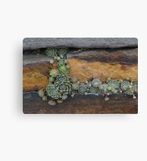 Plants Growing in a Stone Wall Canvas Print