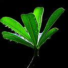 fresh green by jerry  alcantara