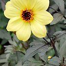 Summer Flower by Tracey Hampton