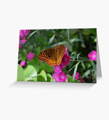 Orange Fritillary Butterfly on Dianthus  Greeting Card