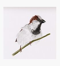 The Watch Dog (house sparrow perched on branch) Photographic Print