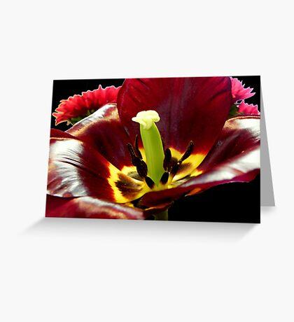 Nature's Wonders ©  Greeting Card