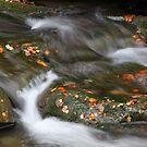 It's Autumn! by Elena Skvortsova