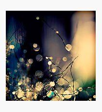 When Fairies  dance. Photographic Print