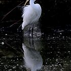Great Egret by Cindy McDonald