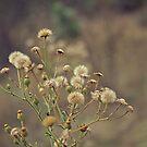 Pretty Weeds by Stephanie Newton