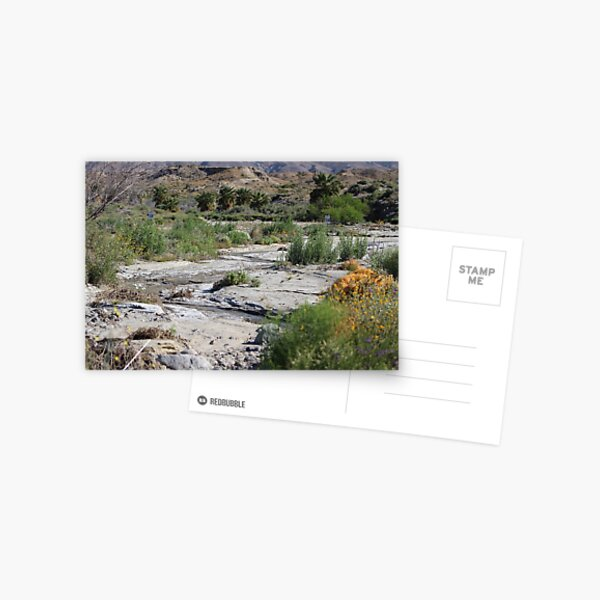 Desert Scene 8 Coachella Valley Wildlife Preserve Postcard