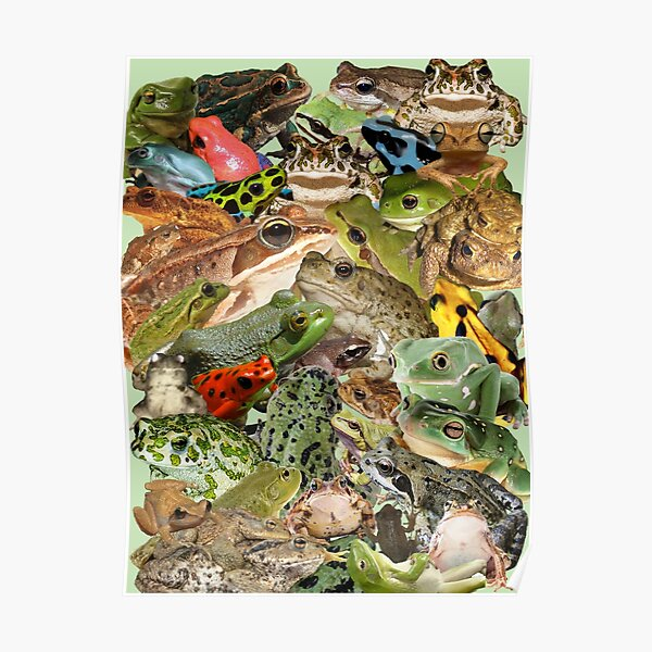 Lots of Frogs Poster