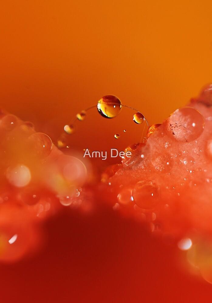 Droplet Bridge by Amy Dee