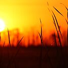 prairie sun by leapdaybride