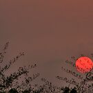 A summer sunset by Madhusudan