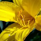 Mellow Yellow! by PatChristensen