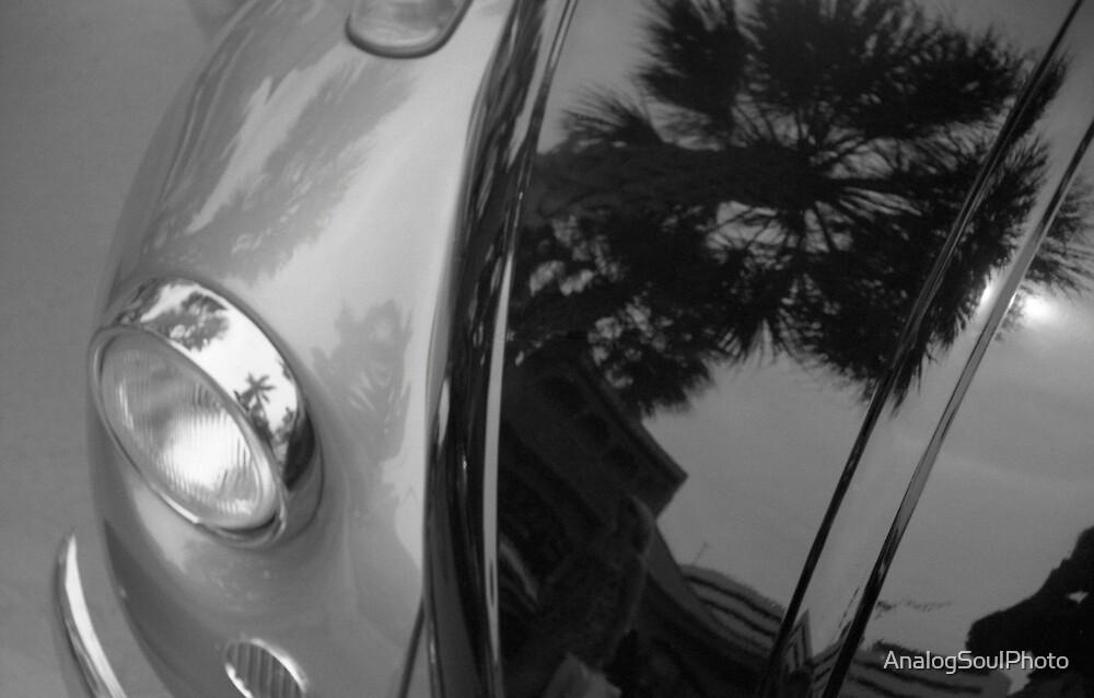 Tropical Bug by AnalogSoulPhoto