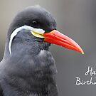 Inca Tern Birthday Card by Lorna Mulligan