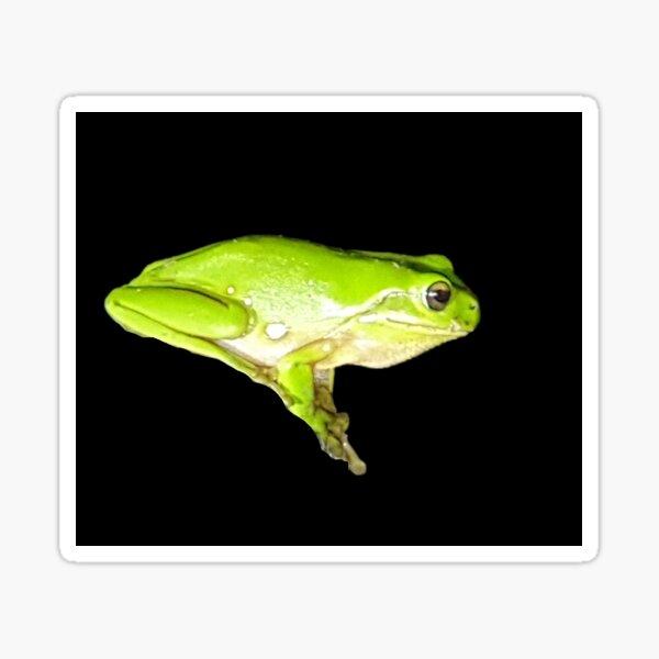 Australian Green tree Frog Sticker