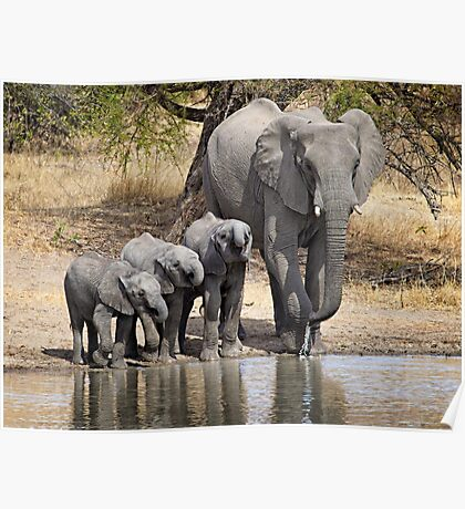 Elephant Mom and Babies Poster
