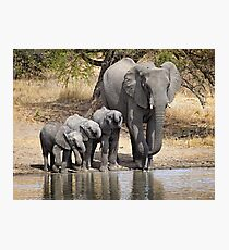 Elephant Mom and Babies Photographic Print