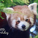 Red Panda Birthday Card by Lorna Mulligan