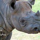 Black Rhino Birthday Card by Lorna Mulligan