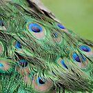 Peacock Backstage by Joe Jennelle