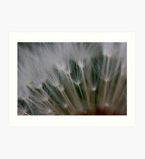 dandelion's secret 2 Art Print