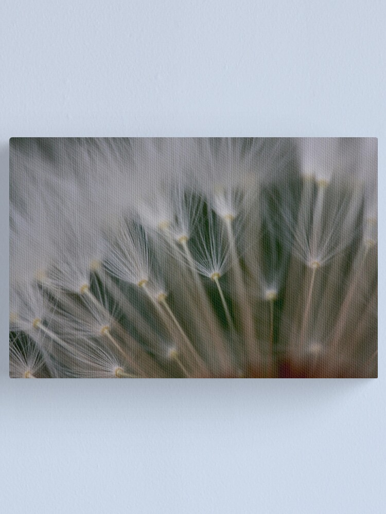 Alternate view of dandelion's secret 2 Canvas Print