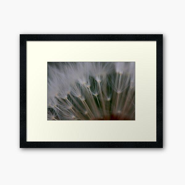 dandelion's secret 2 Framed Art Print