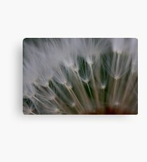 dandelion's secret 2 Canvas Print