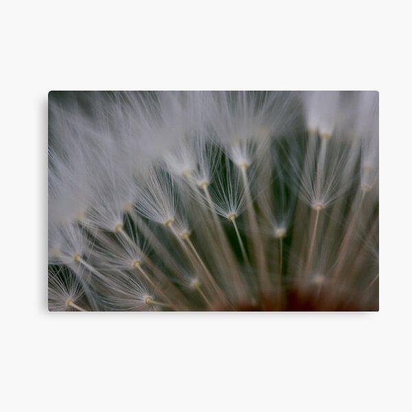 dandelion's secret 2 Canvas Print