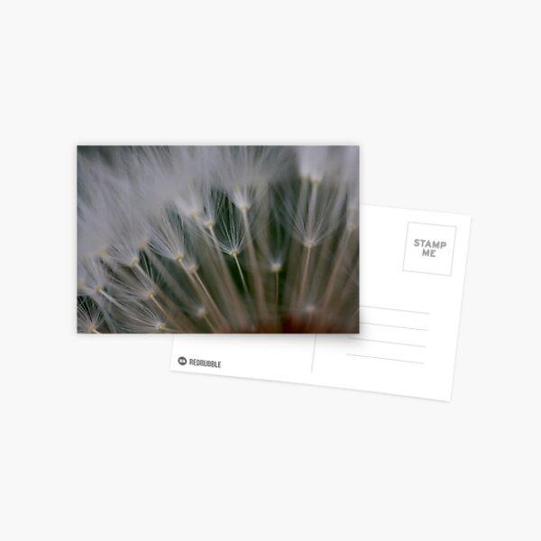 dandelion's secret 2 Postcard