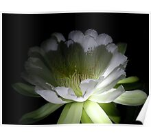 Blooms by flashlight Poster