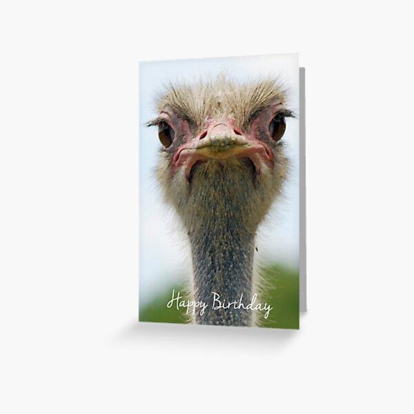 Ostrich Birthday Card Greeting Card
