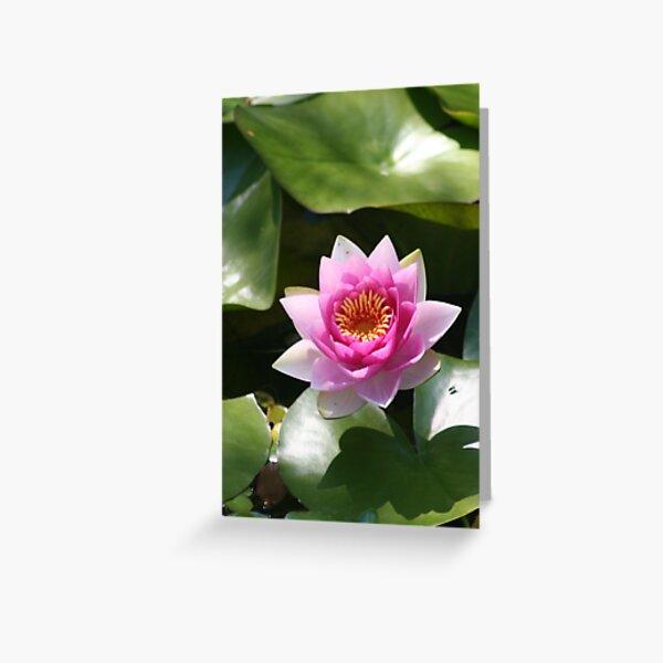 Flowering Lotus evolks zen-like Calmness Greeting Card
