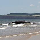 stranded sperm whale, Redcar beach by davejw