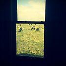 on the farm by trishringe