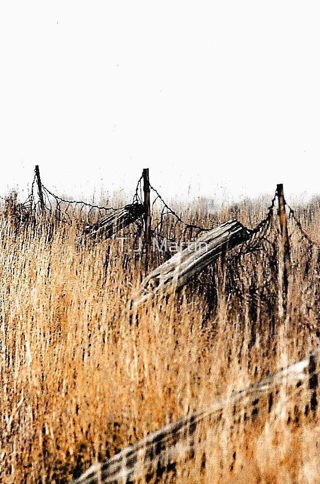 Old Fence - Swansea, Massachusetts by T.J. Martin