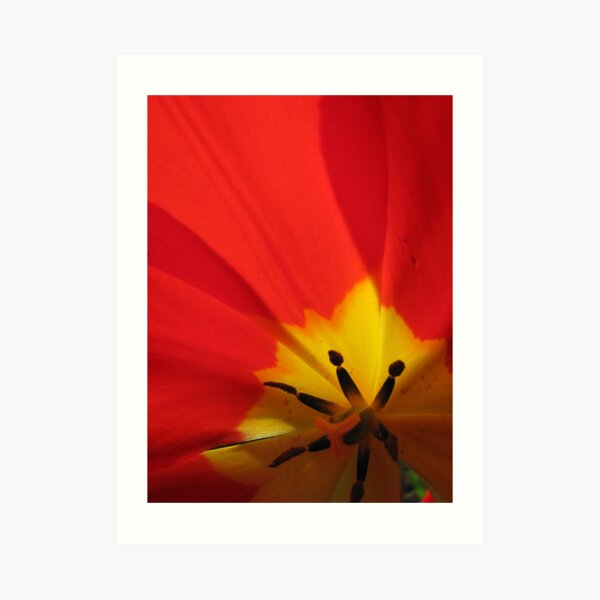 Abstractions... close-up of a tulip Art Print
