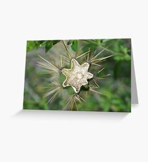 Broken Cactus Greeting Card