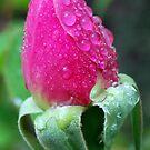 Arise by Lozzar Flowers & Art